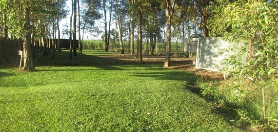 Alida's Pet Resort Lawn